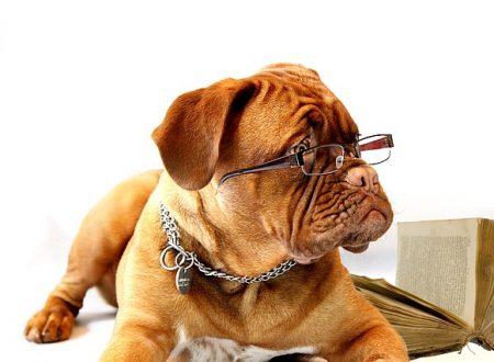 Del morso inferto da un cane ad un passante (lesioni), ne risponde il padrone