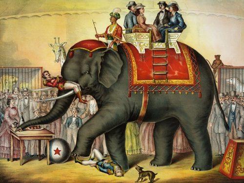 Verso la riforma dello spettacolo circense: in esame al Senato il ddl sul divieto di utilizzo degli animali nei circhi